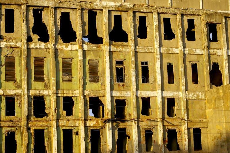 rośliny zniszczona stara ściana zdjęcie royalty free