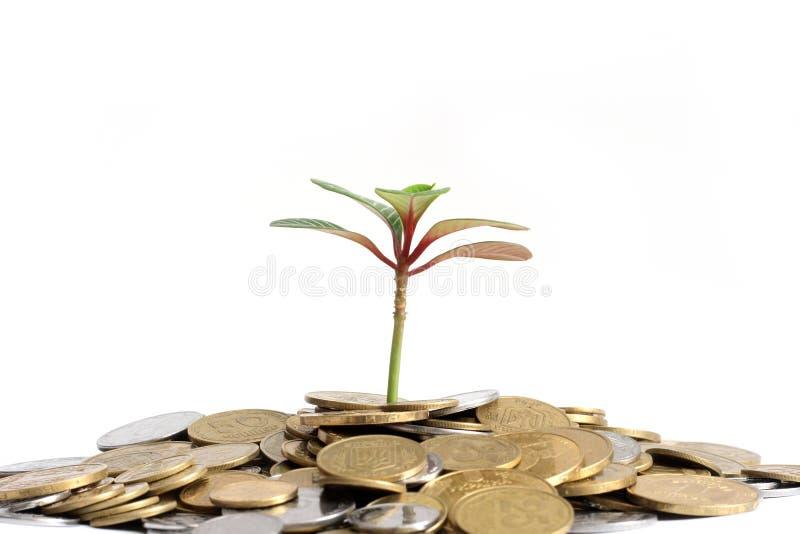Download Roślina zdjęcie stock. Obraz złożonej z sterta, bogactwo - 13328966