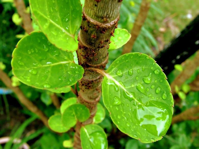 Download Rośliny zdjęcie stock. Obraz złożonej z zakończenie, liść - 34432
