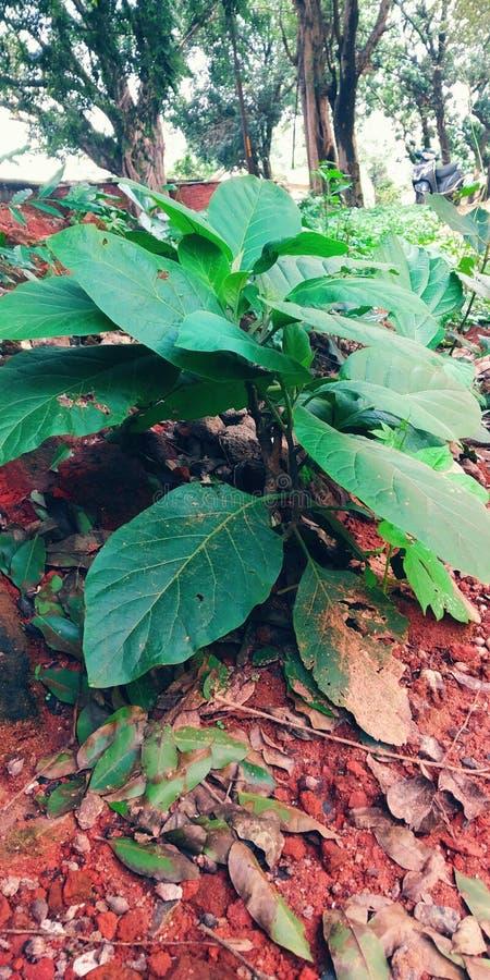 Ro?liny i kwiaty zdjęcia stock