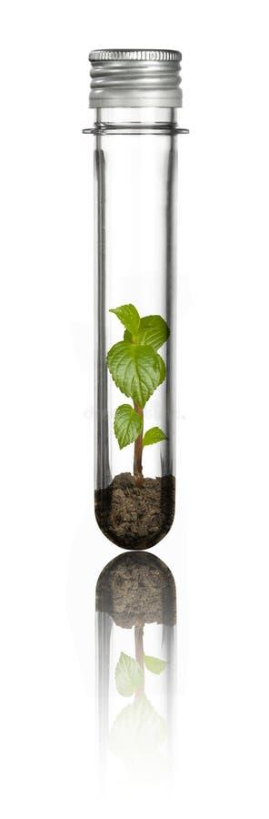 Download Rośliny nowa tubka obraz stock. Obraz złożonej z ziemia - 13331667