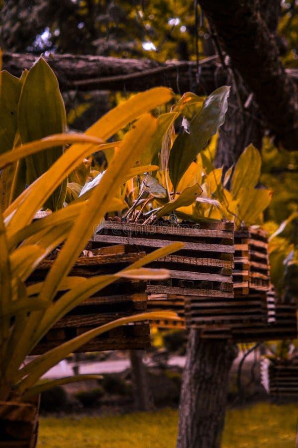 Ro?liny w lesie fotografia royalty free