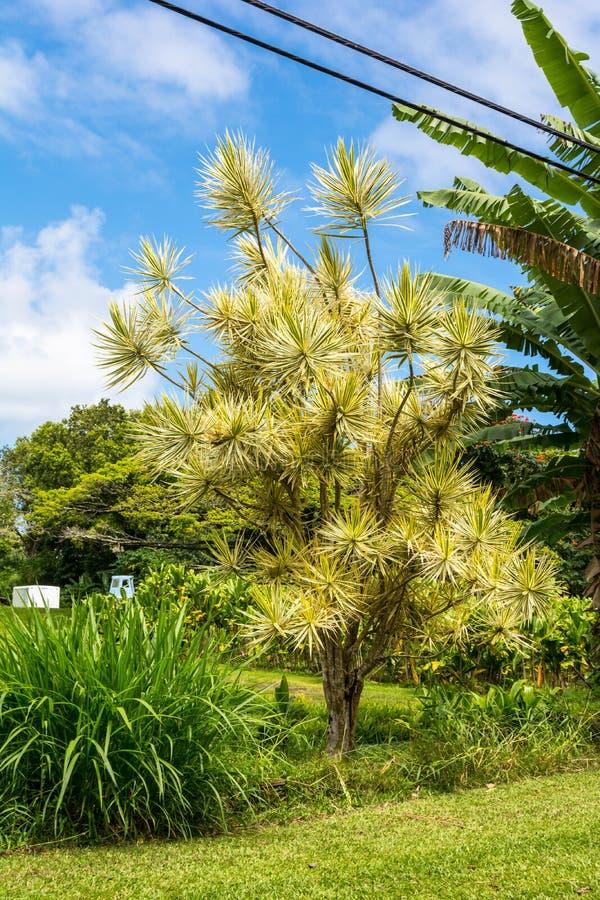 Download Rośliny w Maui, Hawaje zdjęcie stock. Obraz złożonej z hawajczycy - 57665830