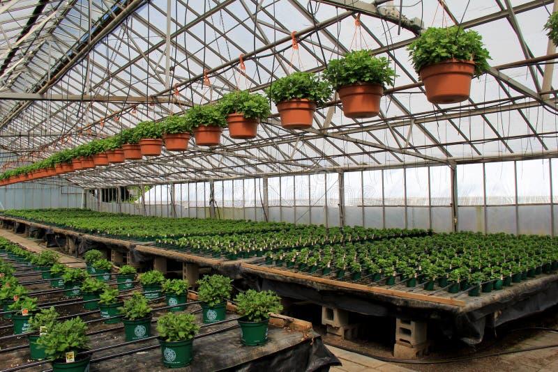 Ro på rad av sunda växter som börjar att växa, Sunny Side Gardens, Saratoga Springs, New York, 2017 fotografering för bildbyråer