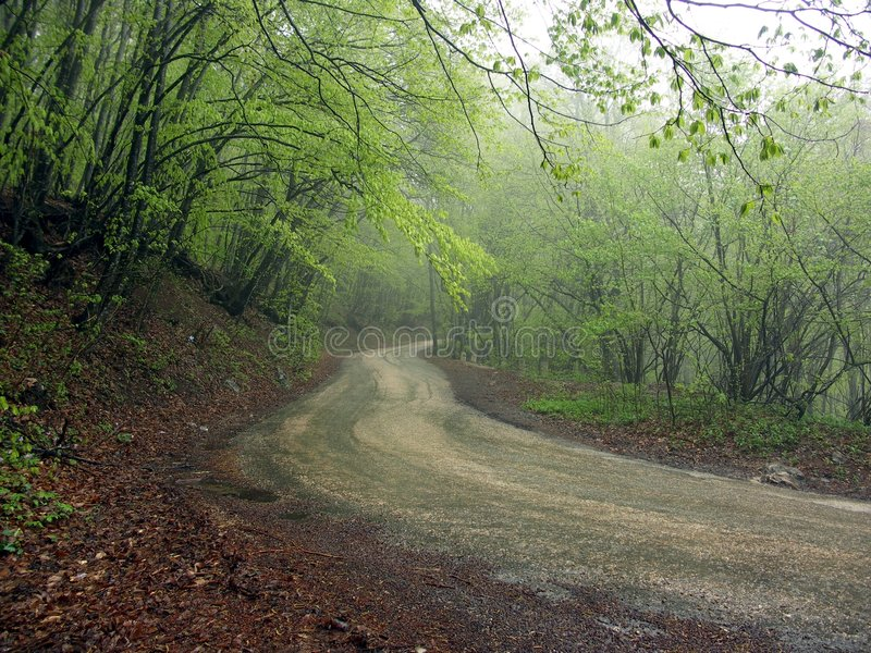 Download Road stock image. Image of streamer, forest, drive, pathway - 168143