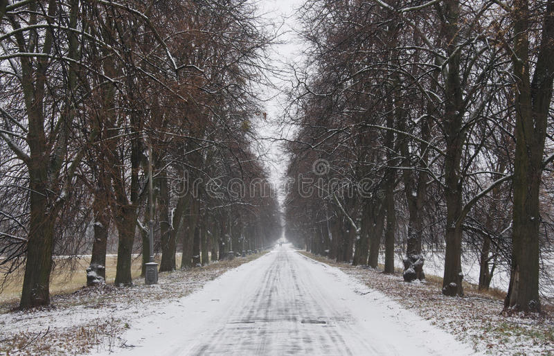 Download Road stock image. Image of february, light, park, path - 24544217