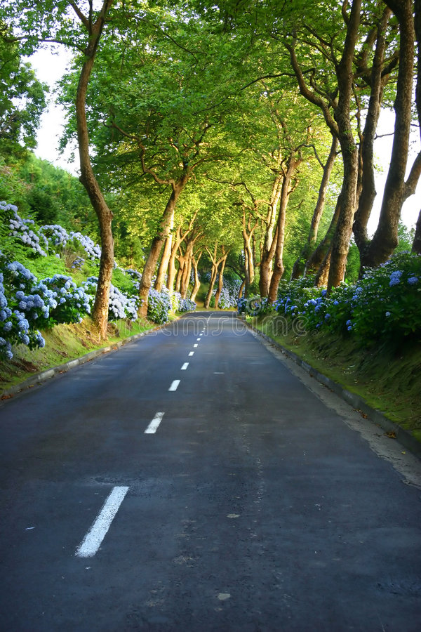 Download Road stock photo. Image of early, land, lush, forest, first - 458736