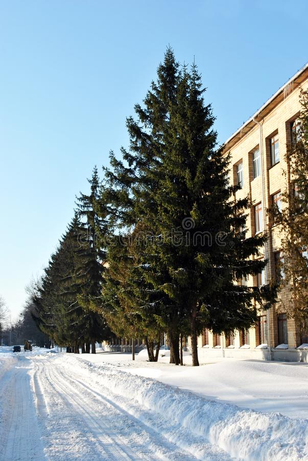 Road along white brick building and line of pine trees, winter sunny sky. Vertical royalty free stock photography