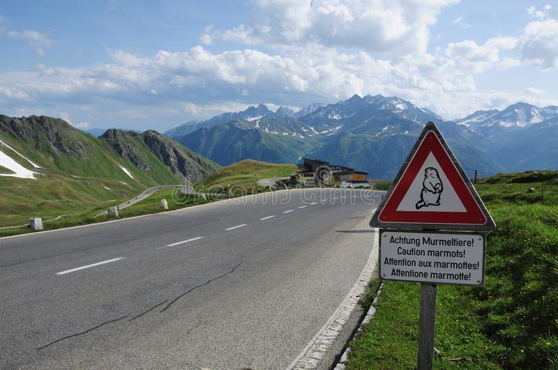 Road in the Alps. This traffic sign alert you to drive slow because marmots can run over the street. This road is in the european alps royalty free stock photos