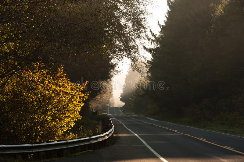 Download Road America stock image. Image of forest, colors, spruce - 34486531