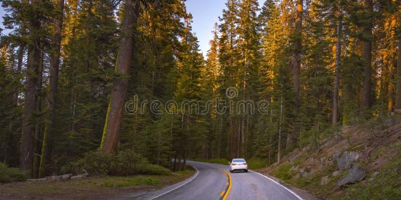 Road amidst towering trees in Yosemite, California stock images