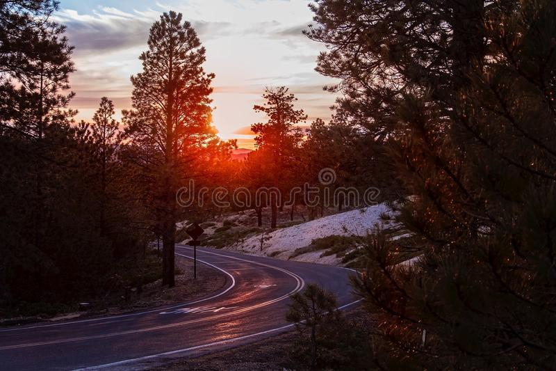 Road Amidst Trees Against Sky during Sunset royalty free stock photos