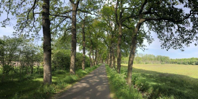 Road around Zelhem. In Gelderland The Netherlands stock photography
