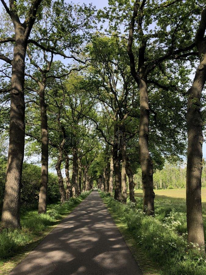 Road around Zelhem. In Gelderland The Netherlands royalty free stock photo