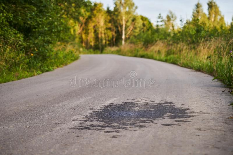 The road is asphalt paved and the forest royalty free stock photography