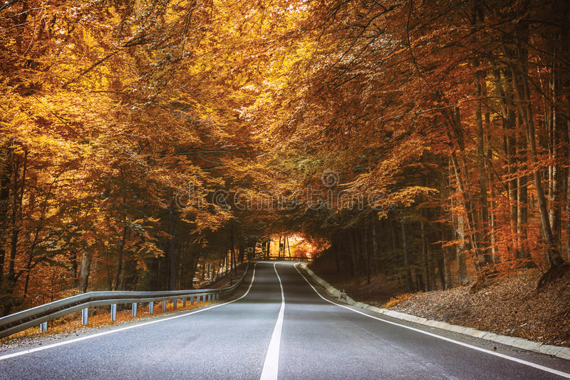 Road in Autumn. Beautiful forest road in autumn stock photos