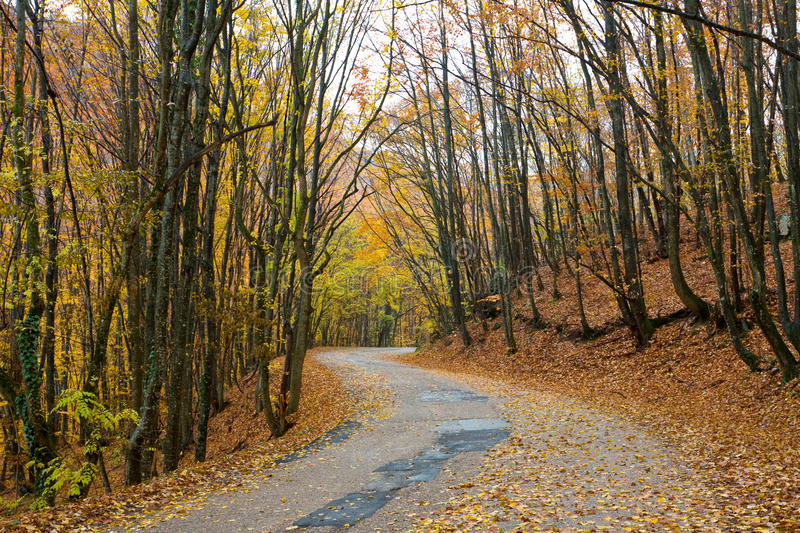 Download Road in autumn forest stock photo. Image of bent, background - 12086090