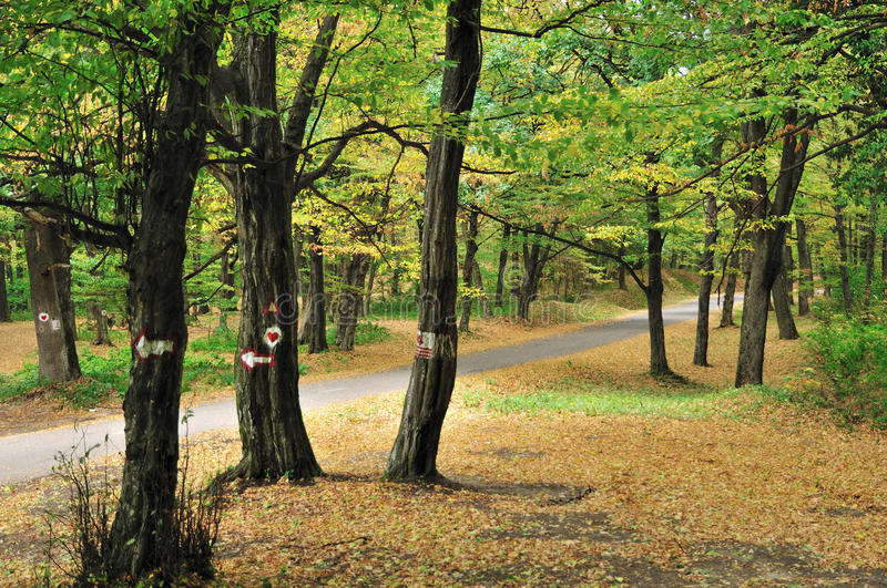 Road in autumn forest stock photography