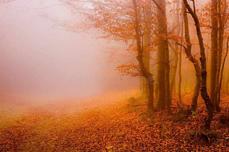 Road through the autumn forest. Fallen leaves and fog stock image