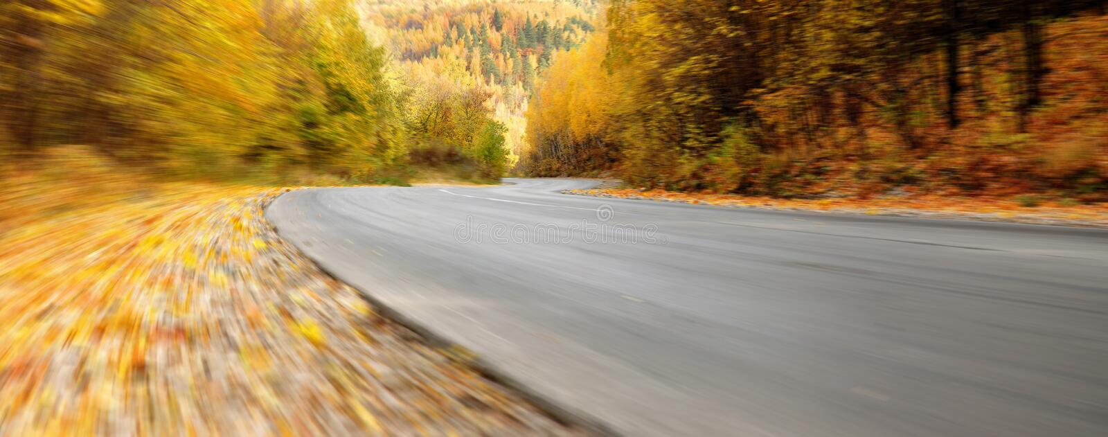 The road in the autumn forest. Panorama royalty free stock images