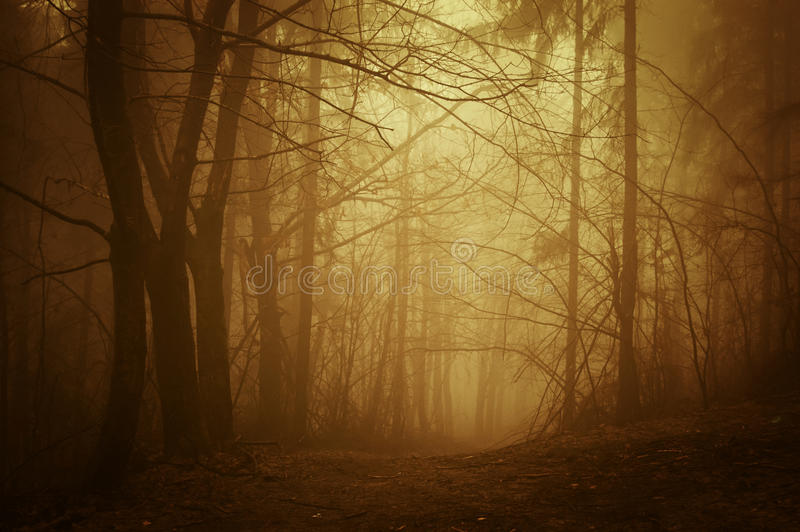 Download Road Through Autumn Forest At Sunrise Stock Photo - Image: 29209276