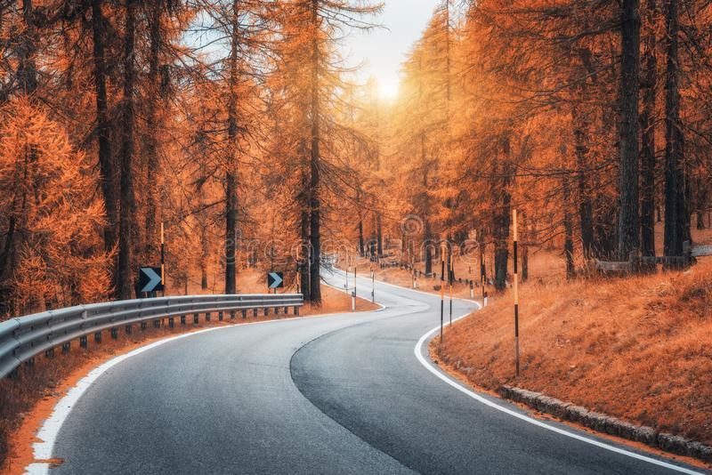 Beautiful winding mountain road in autumn forest at sunset. Road in autumn forest at sunset. Beautiful winding mountain road, trees with red foliage and orange royalty free stock image