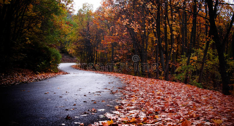 Road in the autumn forest stock photo