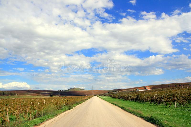 Road in the autumn vineyards stock image