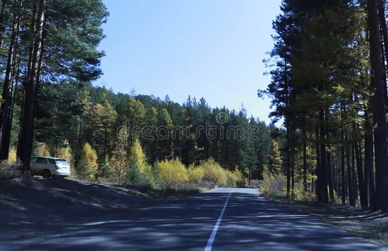 The road through autumn wood. Clear sunny day. stock photography