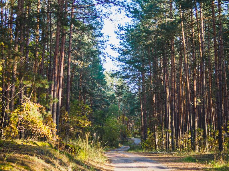 The road through the autumn forestThe road through the autumn yellow and green forest royalty free stock images