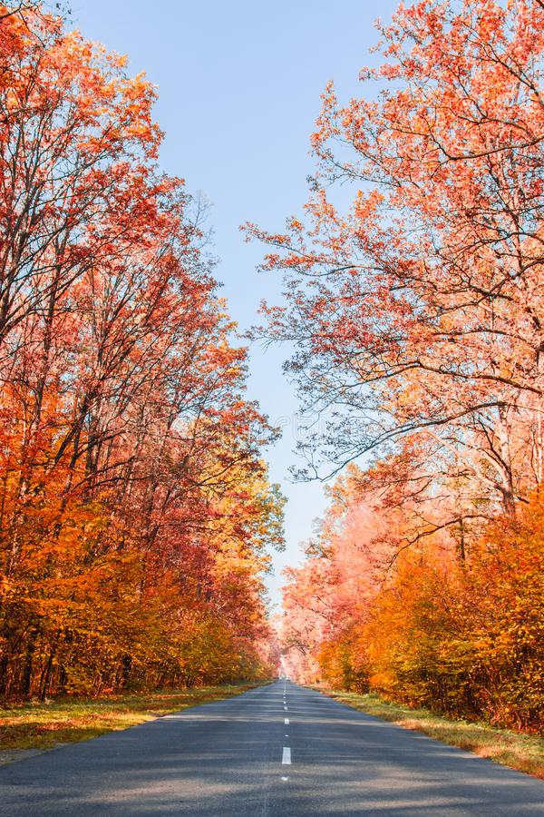 Road in the autumnal forest. Autumn landscape. Nature in autumn stock image
