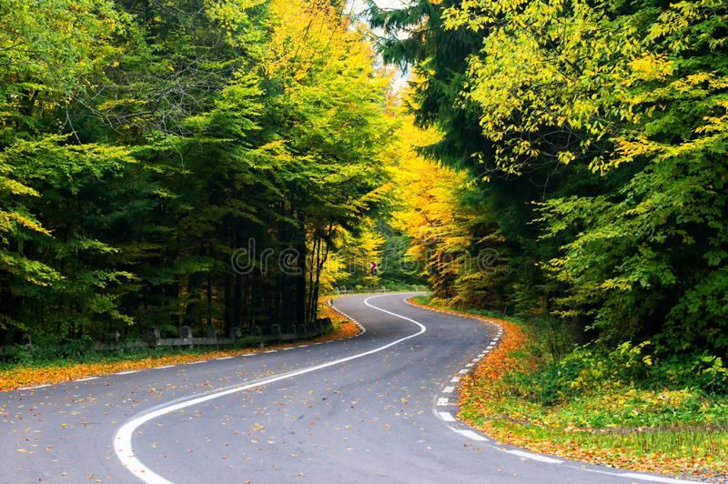 Road in the autumnal forest. Autumn perspective royalty free stock images