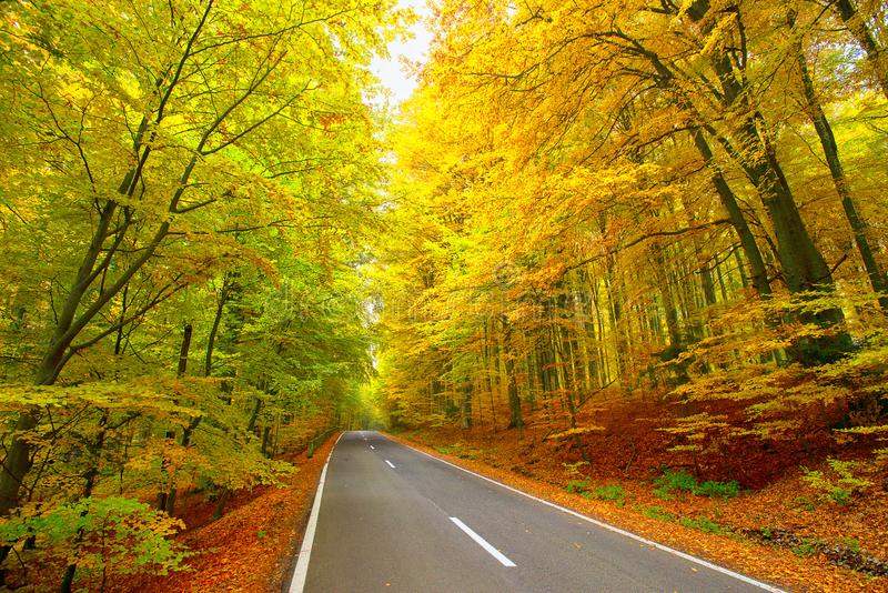Road in the autumnal forest. Beautiful landscape royalty free stock image
