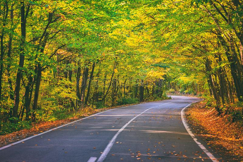 Road in the autumnal forest. Colorful trees in autumn time royalty free stock photos