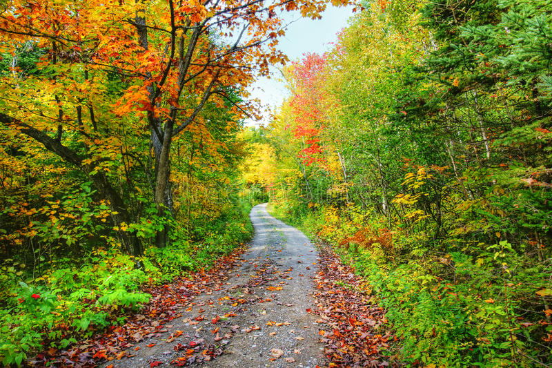Download Path In Colorful Fall Forest Stock Photo - Image: 29933174