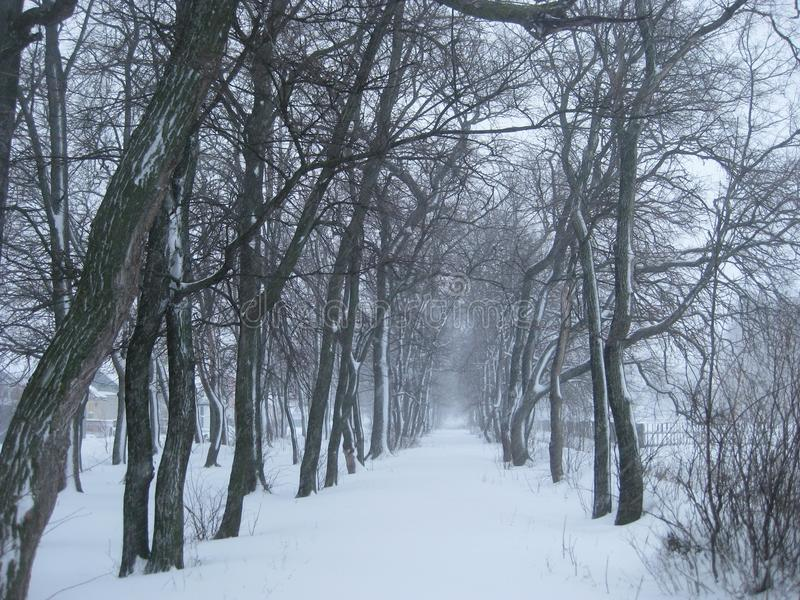 The road, bordered by trees, goes into a snowy distance. Winter, outside it is snowing. Black trees stand on the edge of the road and walk with it in a cold royalty free stock photos
