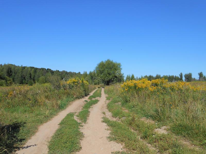 Road with bunches and trees. royalty free stock photography