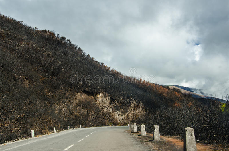 Road through burnt forest of Madeira October 2016 royalty free stock image