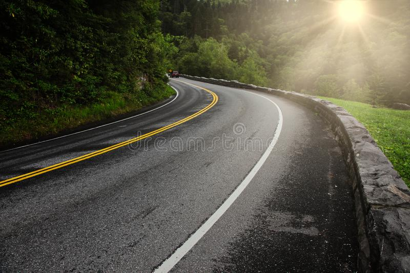 Road with cars, curve summer green trees with sun royalty free stock images