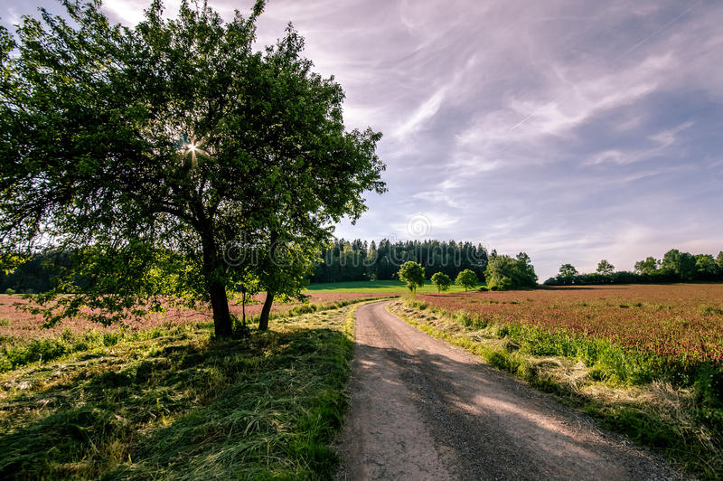 Road between clover fields royalty free stock photography