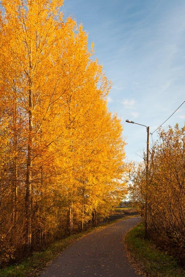 Road and colorful autumn foliage. Scape stock image