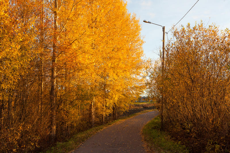 Road and colorful autumn foliage. Scape royalty free stock images