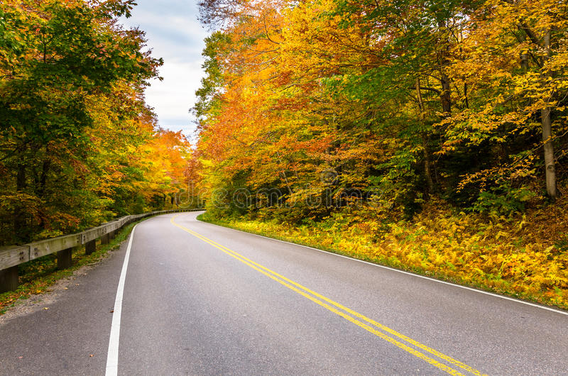 Road through a Colourful Autumn Forest royalty free stock image