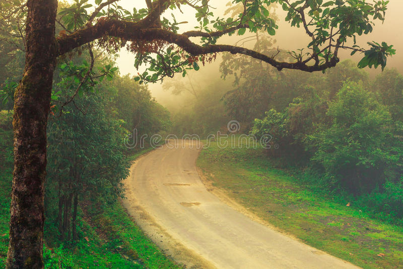 A road in countryside lay through the green trees and fog to somewhere. stock image