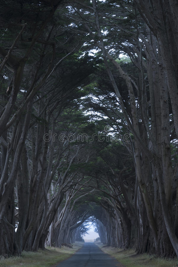 Road covered by a canopy of trees. royalty free stock photos