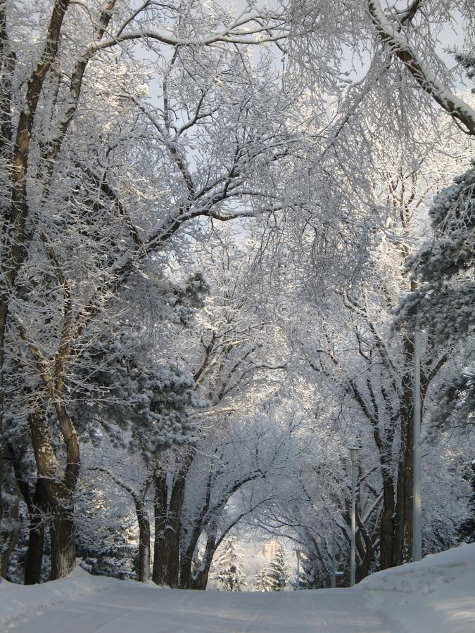 Road covered with snow royalty free stock photo