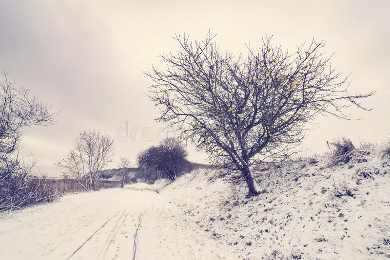 Road covered with snow with an appletree royalty free stock photo
