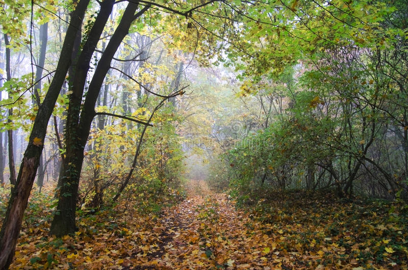 The road is covered with yellow fallen leaves. royalty free stock photo