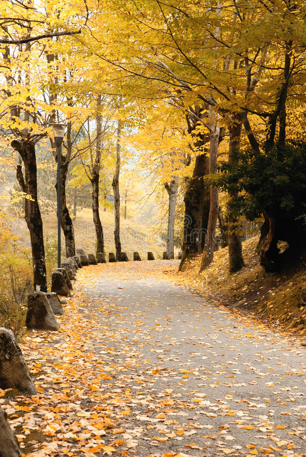 Download Road Covered By Yellow Leaves Stock Photo - Image: 29551196
