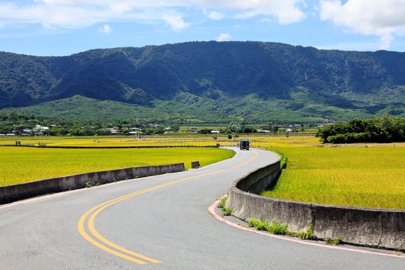 Road cross the rice field in Taidong,Taiwan stock image